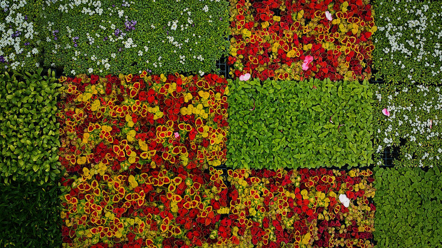 Flatts Eric Barnes Photography Pattern Pieces Flower Colors Backgrounds Colorful Green Leaf Growing Nursery
