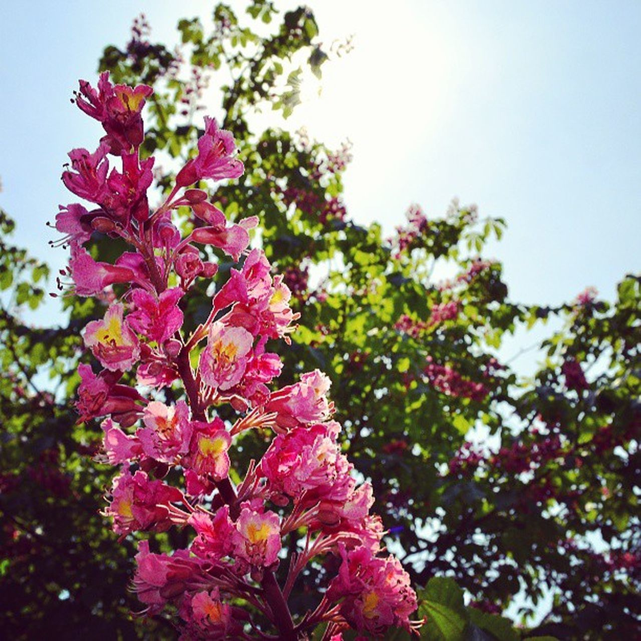 flower, fragility, growth, freshness, nature, blossom, beauty in nature, tree, no people, pink color, petal, day, springtime, low angle view, outdoors, branch, close-up, flower head, sky