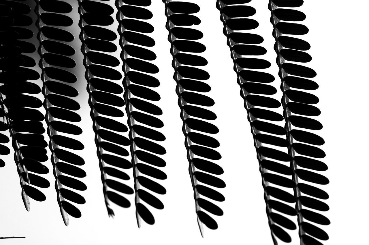 Black And White Blackandwhite Photography Nature Tree Leaves Canonphotography Canon760D No People Beauty In Nature Close-up Plant Symmetry Leaf Still Life Repetition EyeEmNewHere EyeEmNewHere
