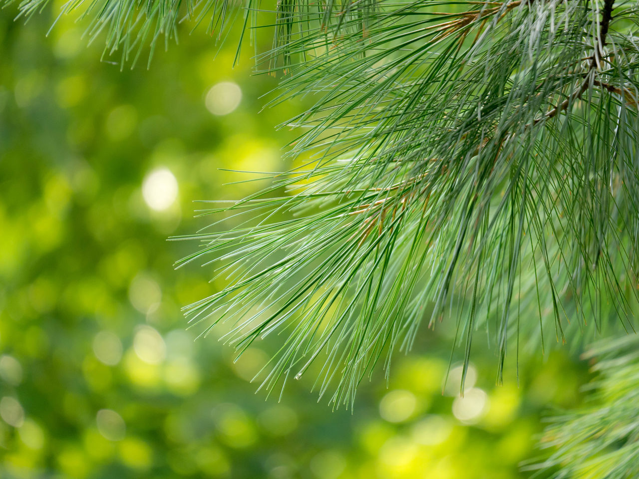nature, green color, growth, beauty in nature, close-up, no people, focus on foreground, outdoors, day, leaf, freshness, tree, branch, fragility, water
