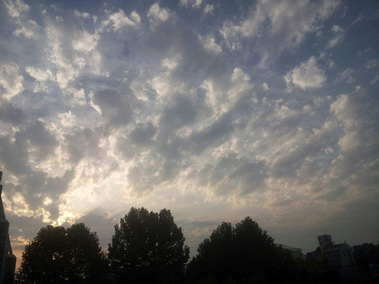 tree, sky, cloud - sky, no people, low angle view, nature, beauty in nature, silhouette, tranquility, outdoors, scenics, day