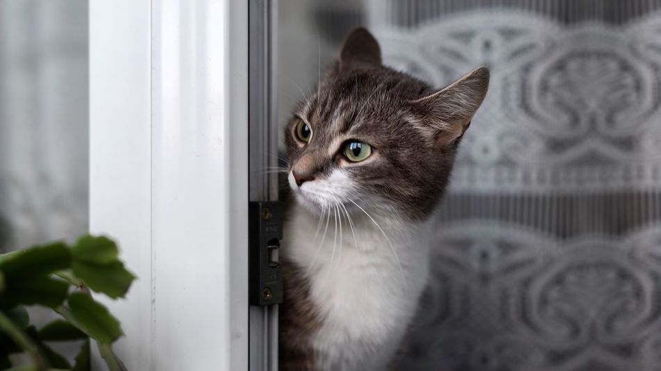 Domestic Cat Pets Domestic Animals Animal Themes One Animal Feline Indoors  Whisker Mammal Window Door No People Home Interior Day Portrait Close-up Cat Cute Kitty