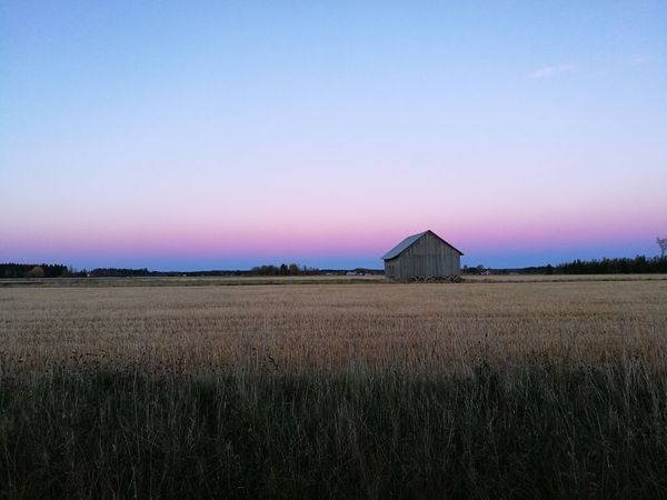 Landscape Rural Scene Tranquil Scene Field Clear Sky Scenics Tranquility Agriculture Beauty In Nature Nature Idyllic Growth Farm Horizon Over Land Distant Blue Non-urban Scene Remote Outdoors No People