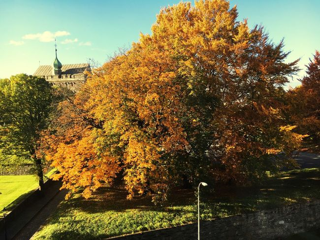 Tree Beauty In Nature Autumn Colour Of Life Orange Tree Yellow Leaves Bergen,Norway Office View