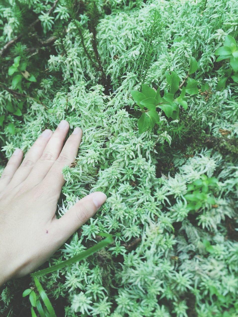 Green Color Naturelovers VSCAM Island First Eyeem Photo Marianateixeira Cousinlove  Color Palette