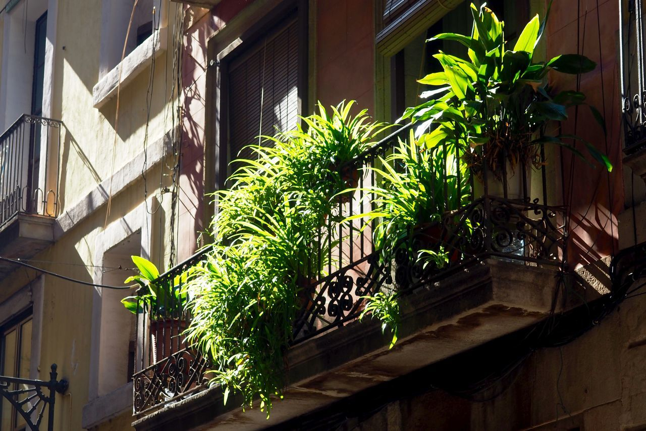 Architecture Balcony Balcony Shot Balcony View Big City Building Exterior Built Structure Day Growth House Jungle Leaf Low Angle View Nature No People Outdoors Plant Potted Plant Window Window Box