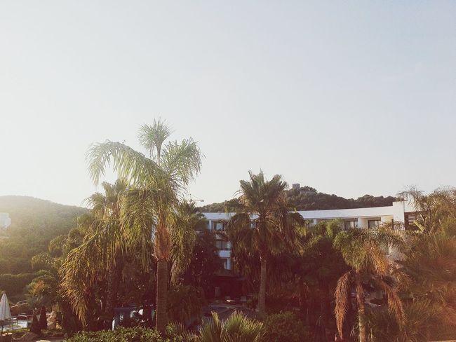 25 Days Of Summer Palms Summertime