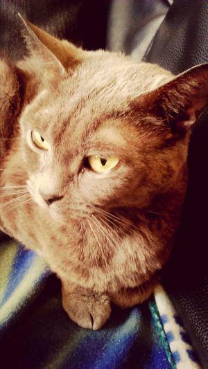 Cute Cats My Love❤ Pet Photography  Berlioz.. ?❤