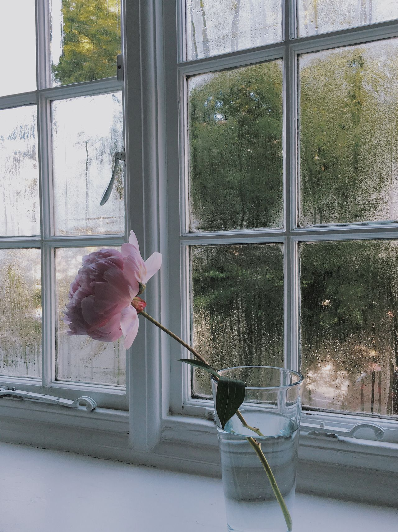 My Favorite Place Flowers Humid London Window Window View Flower Collection Flowers, Nature And Beauty Peony  PeonyBloom Pink Color Pink Flower Green Color Green Leaves Greenery Atmospheric Mood Atmosphere Simplicity Window Reflections Shadows & Lights Transparent Glass Domestic Life Window Frame Freshness