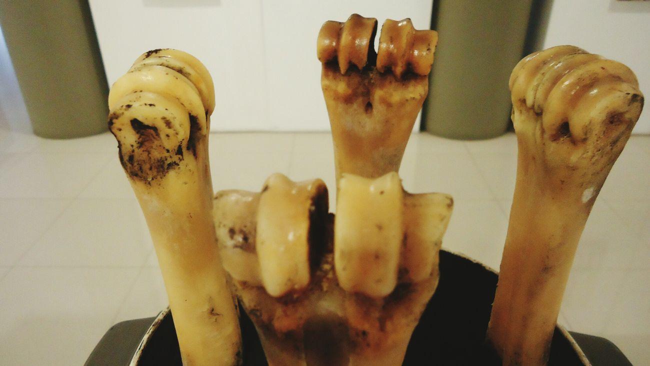 Huesos Antiguos Cultura