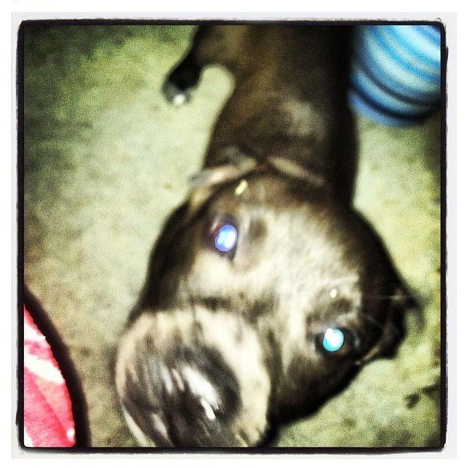 My Blue Eyed Pitt
