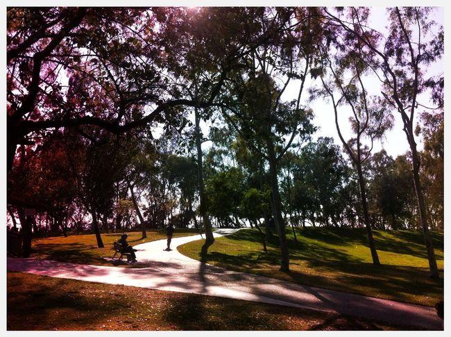 at Charles H. Wilson Park