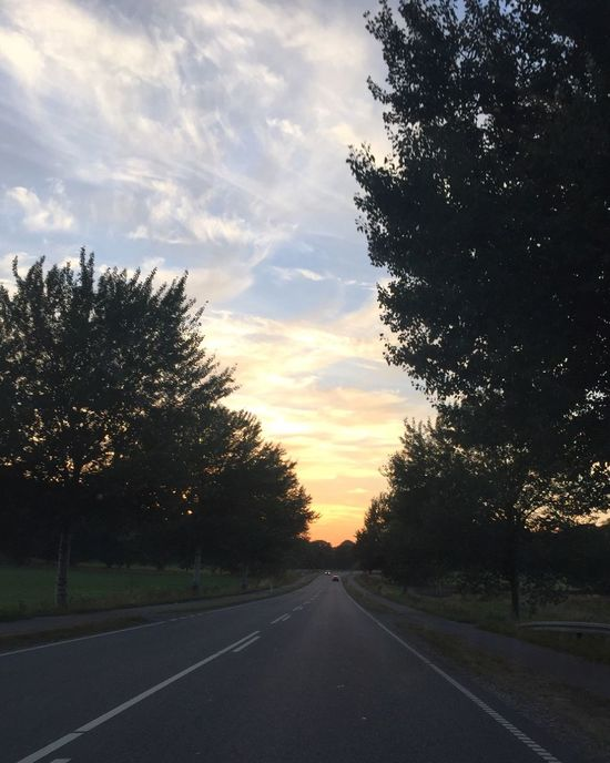 Tree Road Sunset Sky The Way Forward Transportation Diminishing Perspective Cloud - Sky Cloud Road Marking Growth Vanishing Point Tranquil Scene Nature Outdoors Tranquility Cloudy Country Road Scenics Beauty In Nature