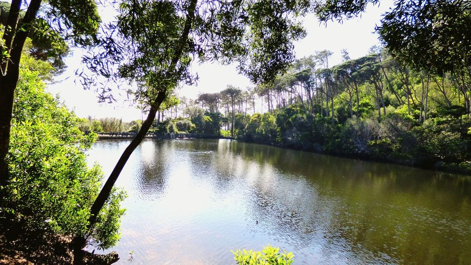 The lake view, this is in Portugal near Sintra... Peace And Quiet Lake View Lake Water Photography Trees Nature Photography Nature_collection Nature Outdoors View Of The Lake Water