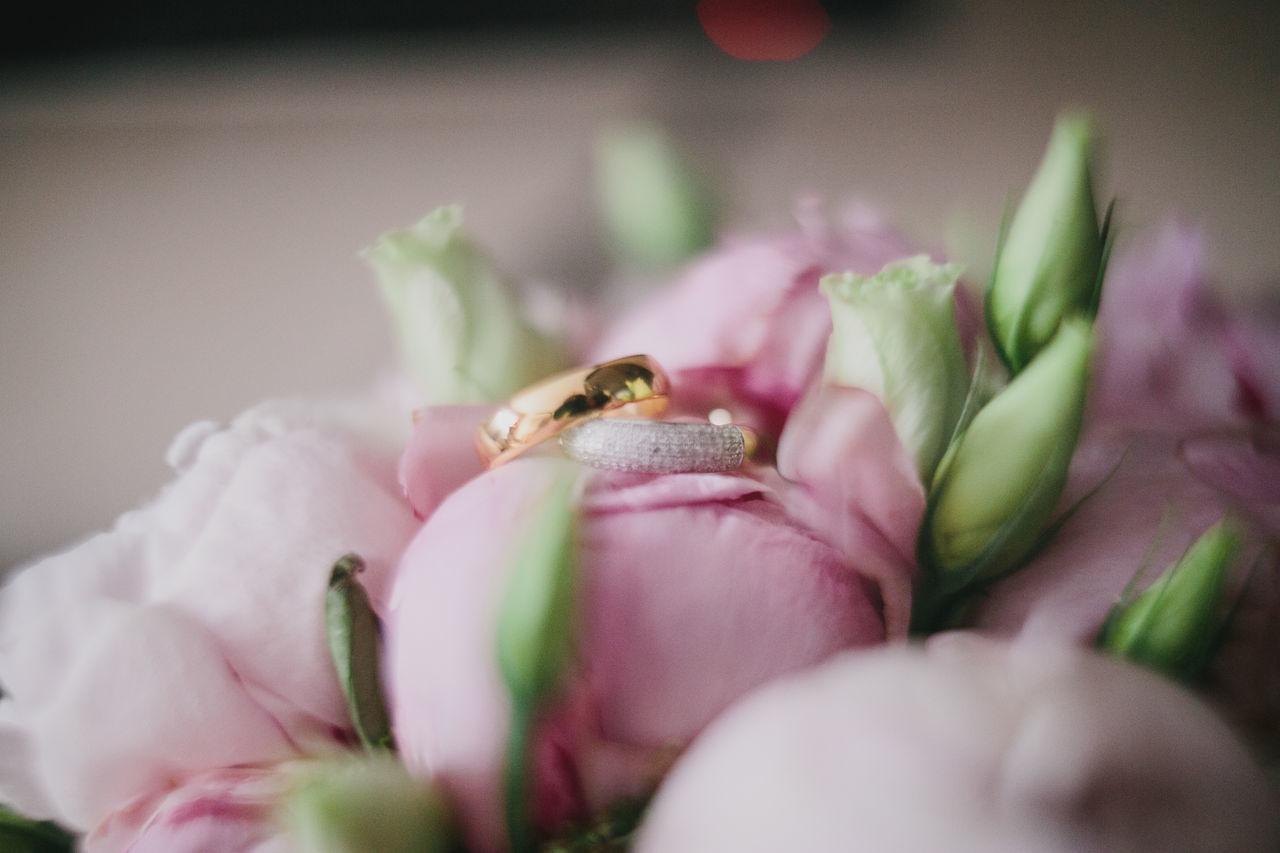 Beautiful stock photos of diamond, Absence, Bouquet, Celebration, Close-Up