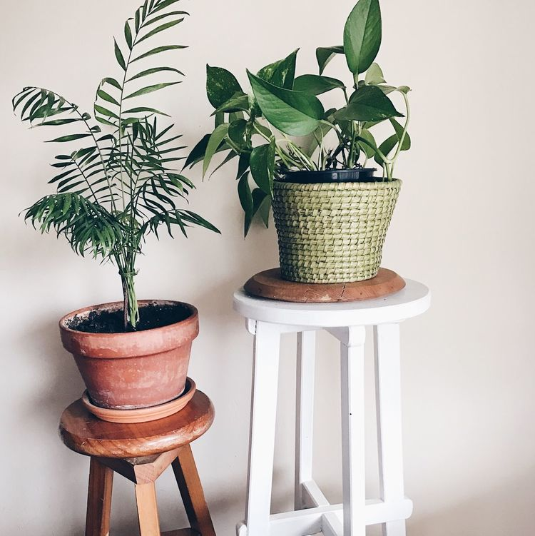 Potted Plant Indoors  Plant Nature Houseplant Green Color Homedecor Home Interior Homedecoration