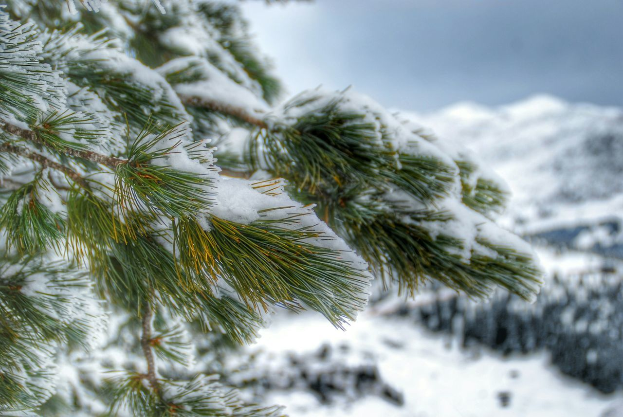 Close-Up Of Snow Covered Branches Against Mountain