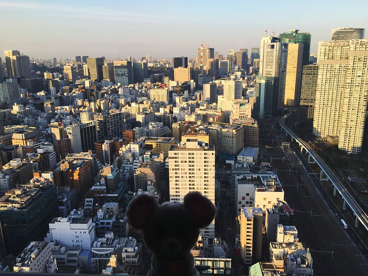 Mouse in Tokyo Mouse🐹 Tower Animals In The Wild Animal Themes cityscape City Skyscraper Architecture Business Finance And Industry Urban Skyline Travel Business Travel Destinations Downtown District Building Exterior Outdoors City Life Sky Office Building Exterior People Day Uniqueness Adapted To The City EyeEmNewHere Lieblingsteil Miles Away Flying High