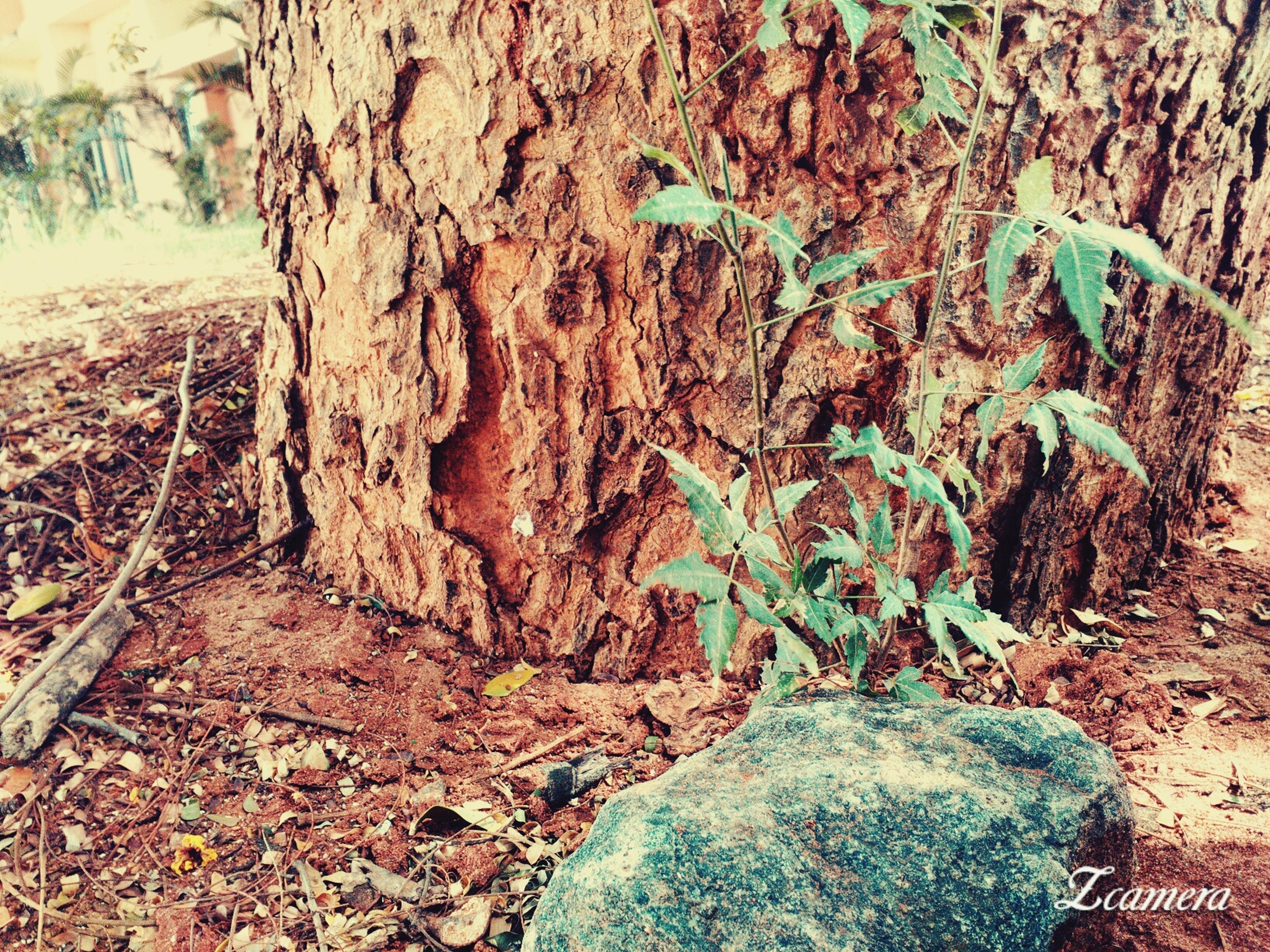 tree trunk, tree, moss, nature, textured, growth, rock - object, forest, close-up, plant, day, tranquility, rough, outdoors, sunlight, no people, beauty in nature, bark, rock, high angle view