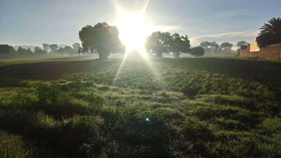 Nature Sunlight Morning Morning Light Mexico