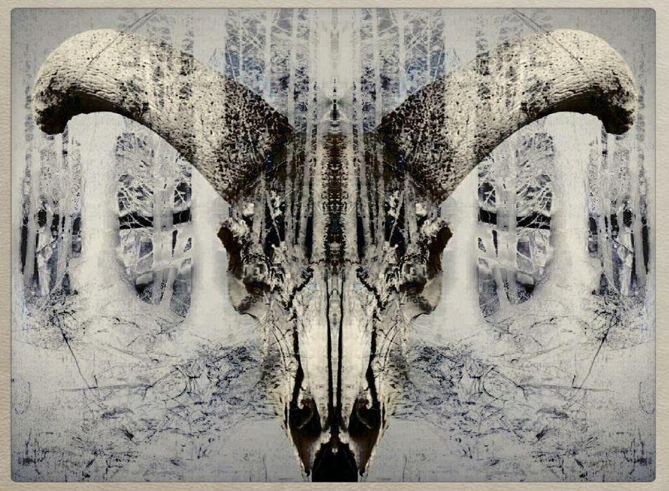 A forgotten piece I had done. I found it in an obscure folder. Now discovered, it is yours to view. Cow Skull Digital Art Photo Manipulation My Artwork Photomanipulation ArtWork Art Art Gallery Artistic Expression