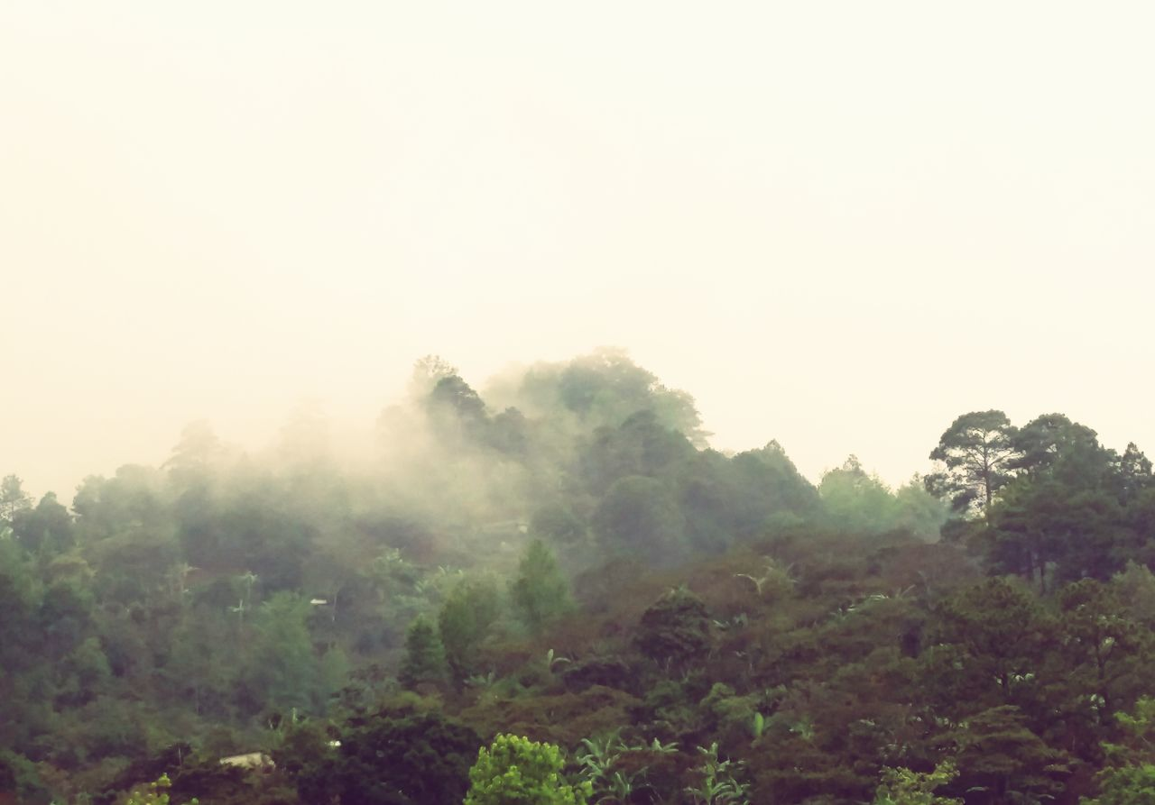 Honduras Fog Morning Tree Nature Outdoors No People Mountain Landscape Forest Sky Day Dawn Beauty In Nature