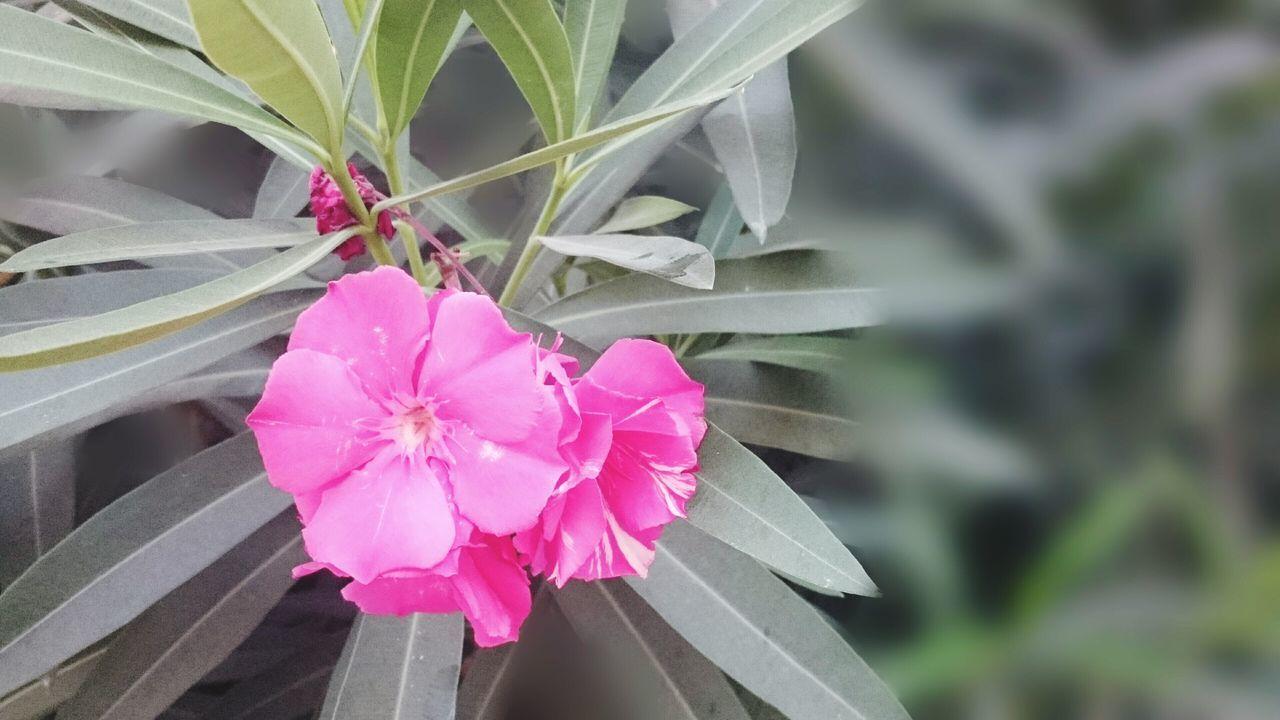 Secret Garden Sony Xperia Z3 Flowers Flower Des Fleurs Wildflowers Fleurs The Moment - 2015 EyeEm Awards Barefoot Nature On Your Doorstep