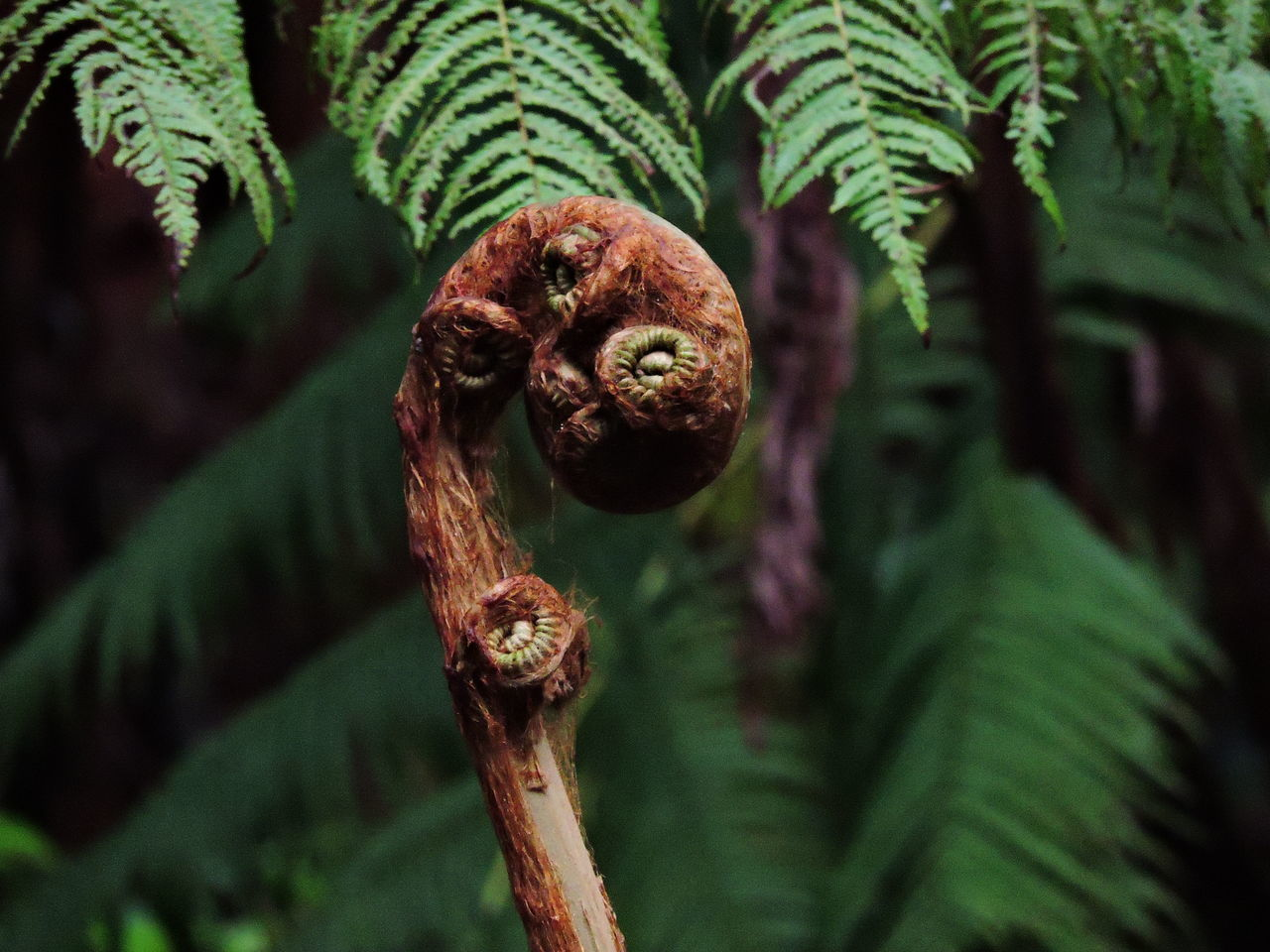 Beauty In Nature Close-up Day Fern Focus On Foreground Fragility Green Color Growth Leaf Nature No People Outdoors Plant Tree