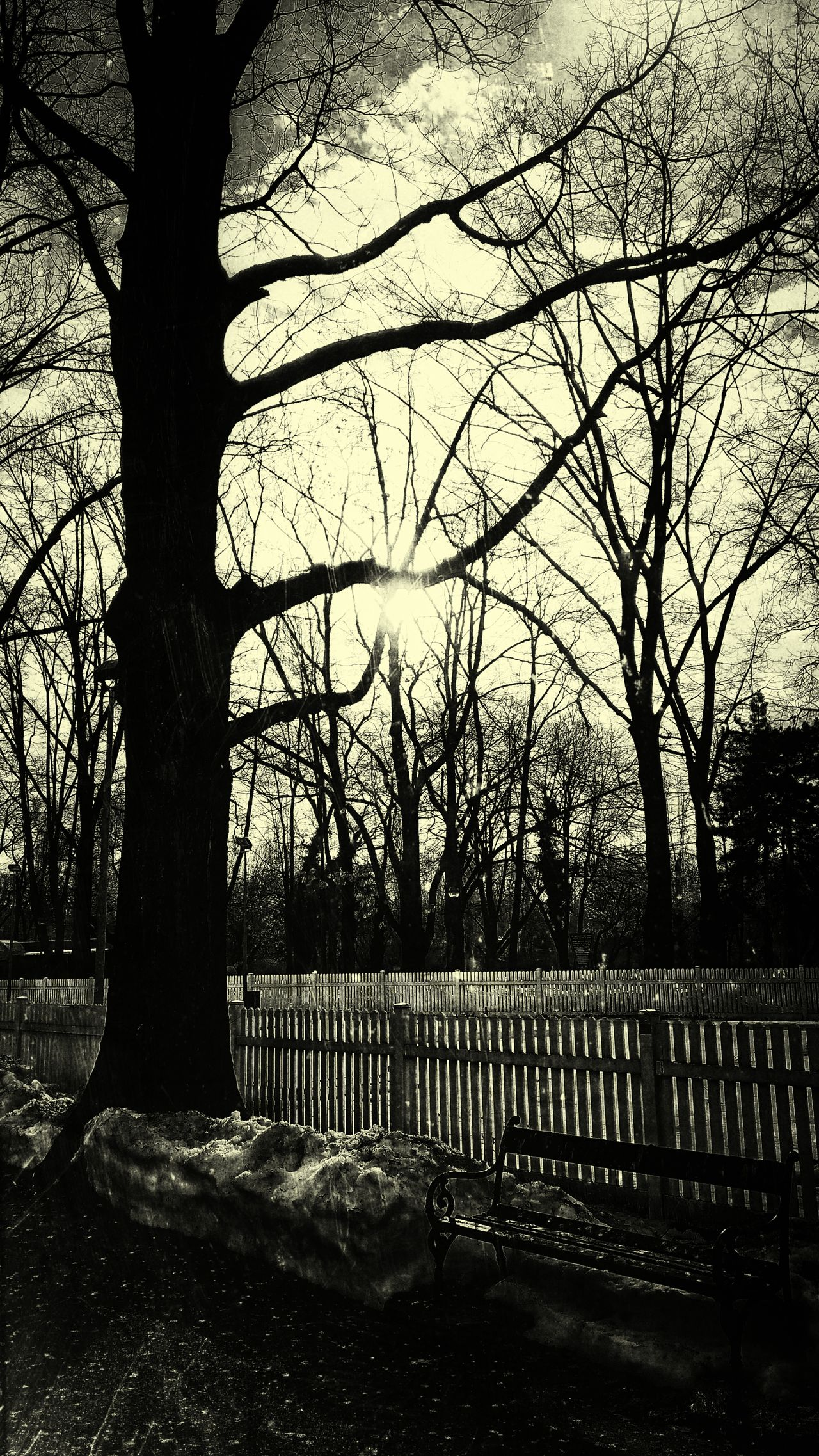Tree Branch Bare Tree No People Day Outdoors Nature Sky Water Parks And Recreation Dramatic Sky Sunsets Parc Blue Sky Idyllic Winter Sunlight Cloud - Sky Black And White Photography Vintage Photo Sunset Scenics Nature Tree Hot Sky