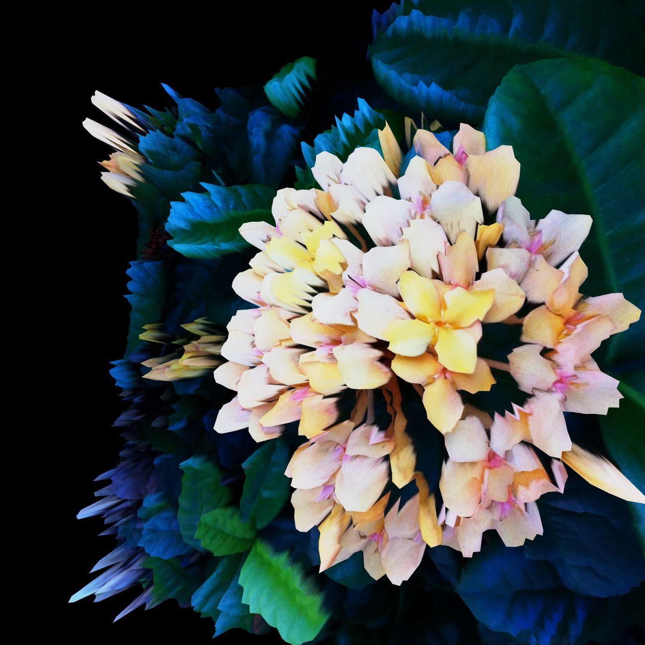 flickering flower Flowers Shootermag EyeEmBestEdits IPhone Art Taschen Things I Like