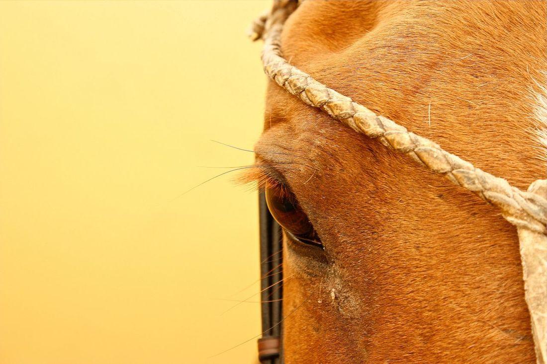 HUBLOT Beach Polo Cup Polo Horse Close Up in Rostock Warnemünde
