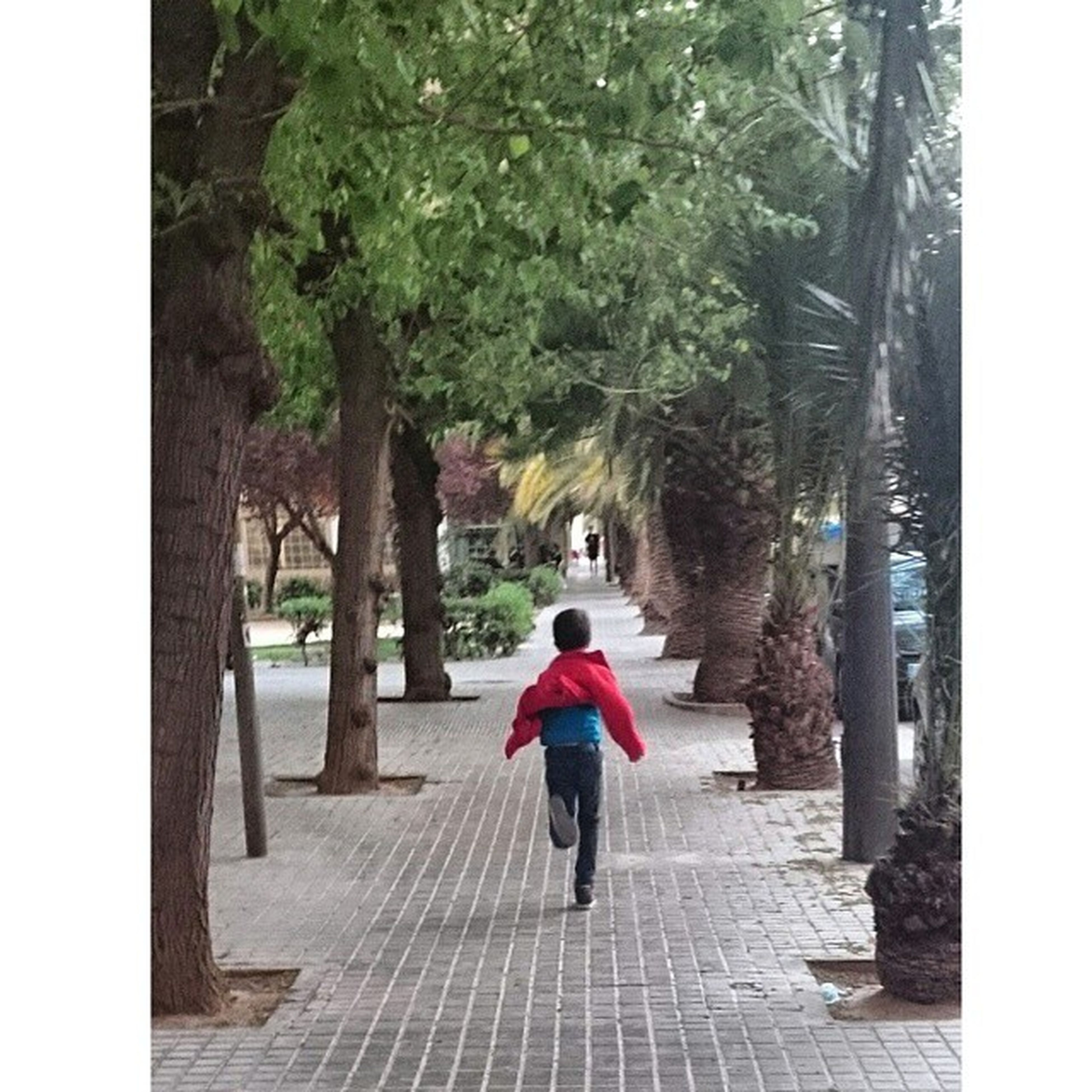 full length, tree, rear view, transfer print, the way forward, walking, lifestyles, footpath, auto post production filter, leisure activity, built structure, person, casual clothing, architecture, building exterior, men, sidewalk, walkway