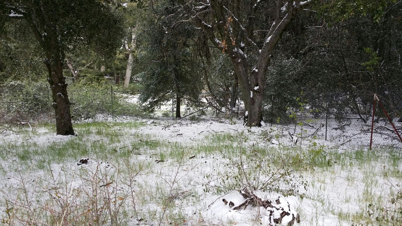 Snow storm on mount Palomar - where you can get desert heat and winter freeze within the same day!