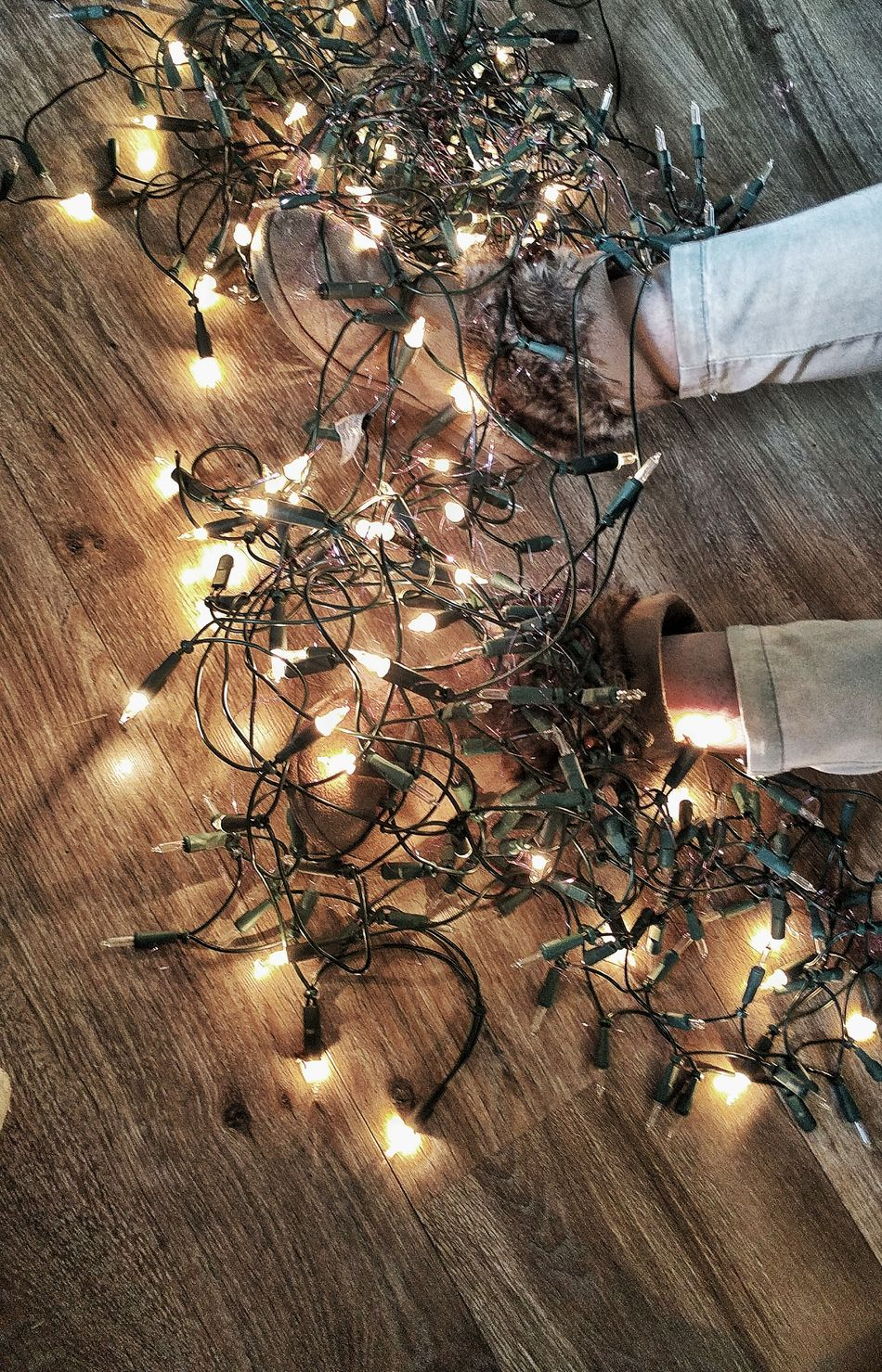 Christmas Preparations Christmas Lights Close-up No People Nature Backgrounds Indoors  Water Day Beauty In Nature Animal Themes Christm Christmas Decoration Christmas Decorations Christmas Ornament Christmas Around The World Christmas Spirit Christmas Time