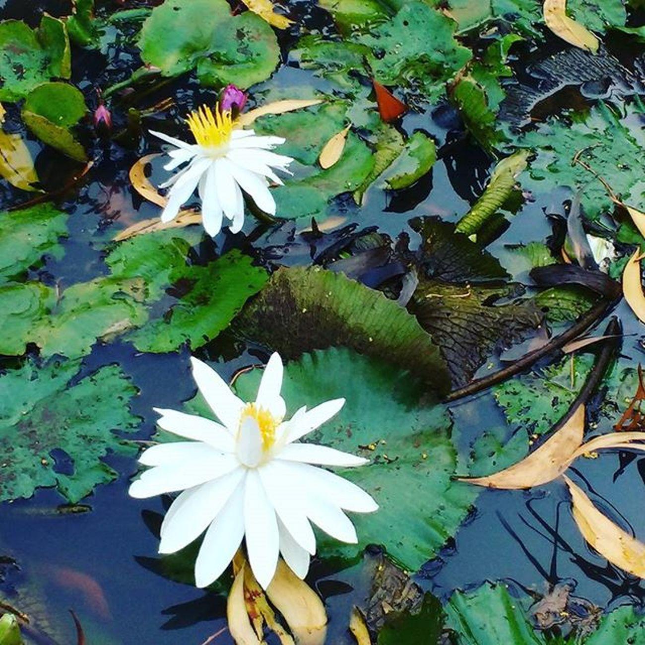 NaturalBeauty Beauty Flowers Flower Dassaumen Saumen Dass Sdas Saumendas Sid