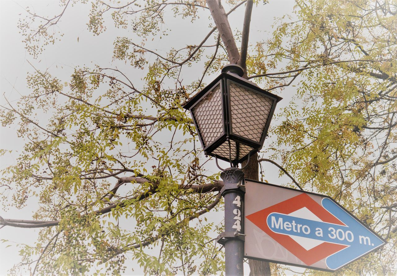 Metro sign among trees Close-up Communication Day Directional Sign Low Angle View Metro Metro Madrid Metro Sign Metro Station Mist Misty Nature No People Outdoors Panel Signal Sky Street Photography Streetlamp Animals In The Wild Adapted To The City Subway Sign Text Tree Underground Signs