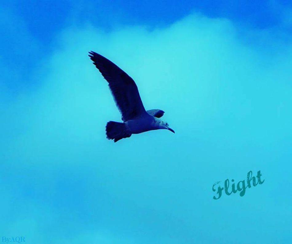Birds Chile Norte Antofagasta