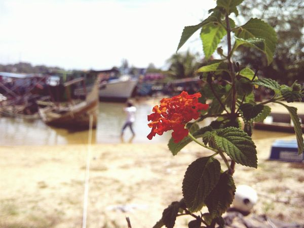 Found On The Roll Flowers, Nature And Beauty Beachphotography Boats⛵️ Sailor Fishermanvillage Flowerporn Beachlife EyeEm Gallery EyeEm Best Shots Throwback ✌ EyeEm Nature Lover EyeEm Best Shots - Nature Marang Terengganu