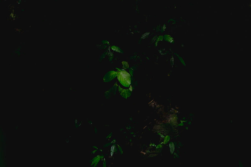 Beauty In Nature Black Background Contrast Fineart Fineartphotography Green Color Growth Jungle Leaves Mexico Nature Nature Nature Photography Nature_collection Night No People Outdoors San Luis Potosí Underwater Xilitla