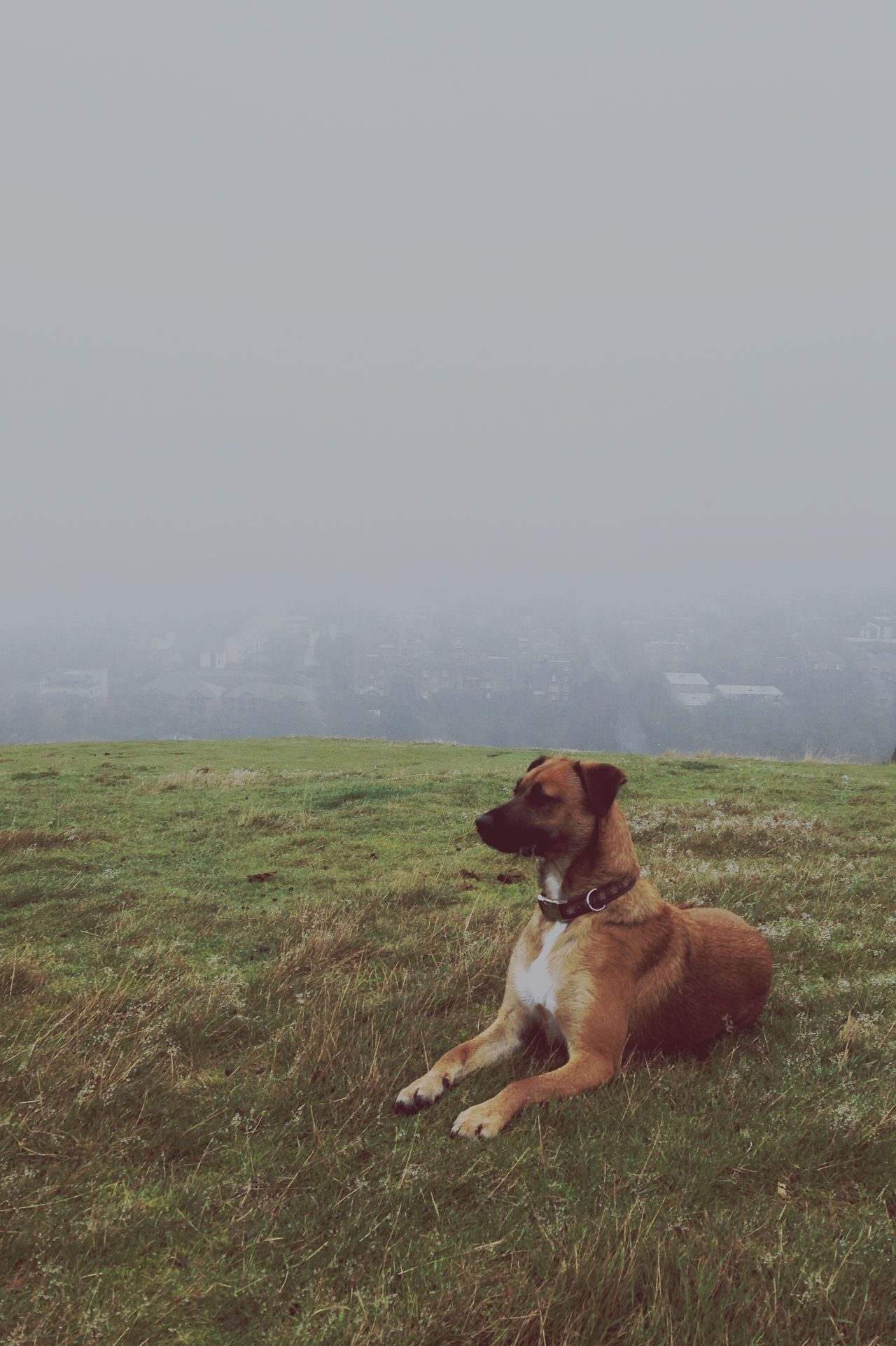 Misty on Blackford Hill Misty Morning Dog Walking Fog Blackfordhill Edinburgh Edinburgh Winter