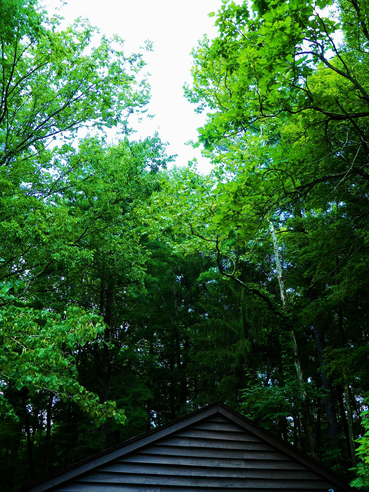 CCC site at McCormick's Creek Beauty In Nature Built Structure CCCamp Day Green Green Color Growth Low Angle View Lush Foliage Nature No People Outdoors Park Rooftop Rooftop Scenery Rooftop View  Rooftopphotography Rooftops Shelter Sky Tranquil Scene Tranquility Tree Trees Woods