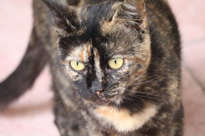 Cat Kedi Kedicik Kedidir Kedi Ugly Istanbul Bakış Tekir Pets Whisker
