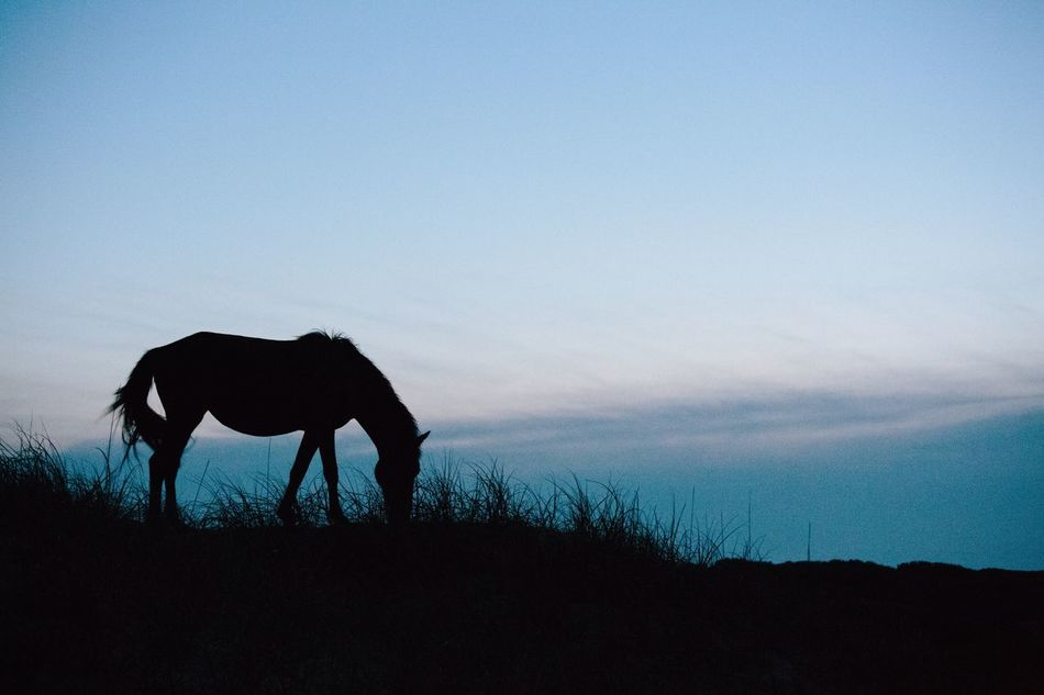 Wild horses of the Outer Banks, Corolla, North Carolina The Great Outdoors - 2015 EyeEm Awards The Traveler - 2015 EyeEm Awards Silhouette North Carolina Horses Horses