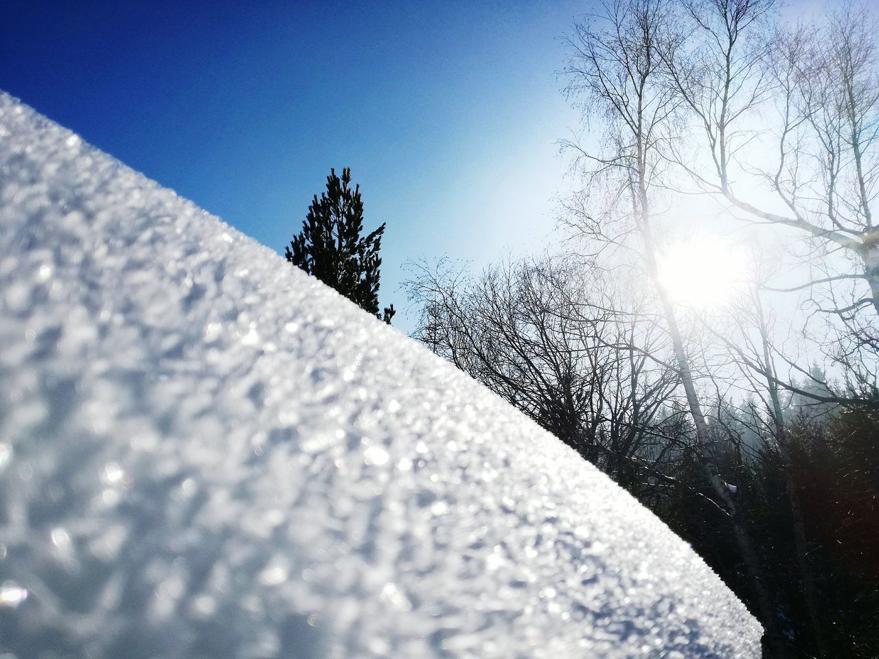 Sunlight Tree Nature Close-up No People Sky Beauty In Nature Cold Temperature Snow Sunbeam Outdoors Day Water Freshness Vitosha National Park Vitosha Mountain Sofia, Bulgaria Bulgaria Vitosha Mountain Nature Low Angle View Tree Snow ❄ Sun Sunlight Sunlight And Shadow