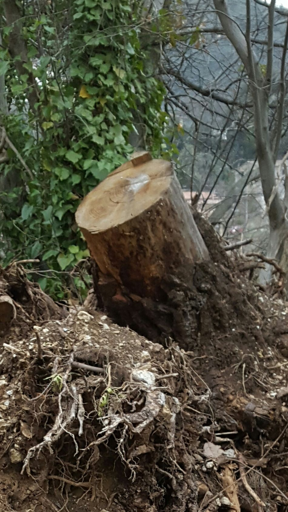 Tree Nature Outdoors Material - Wood Death Nature
