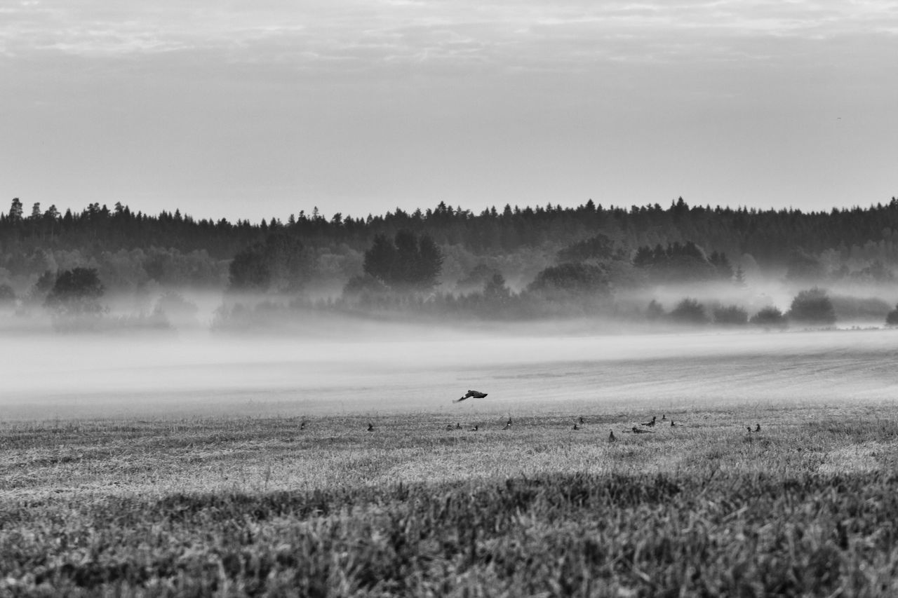 The fog is spreading out over the fields - Agriculture Beauty In Nature Black & White Black And White Blackandwhite Cultivated Land Exceptional Photographs EyeEm Best Shots - Black + White Field Fieldscape First Eyeem Photo Foggy Foggy Landscape Foggy Morning Hello World Mist Misty Morning Nature Non-urban Scene Remote Rural Scene Scenics The Week Of Eyeem Tranquil Scene Tranquility