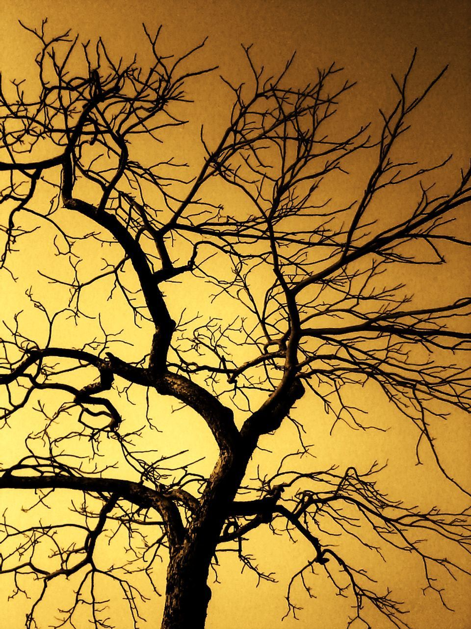 bare tree, tree, branch, silhouette, lone, nature, tranquility, tree trunk, beauty in nature, sunset, dead tree, scenics, outdoors, no people, sky, day