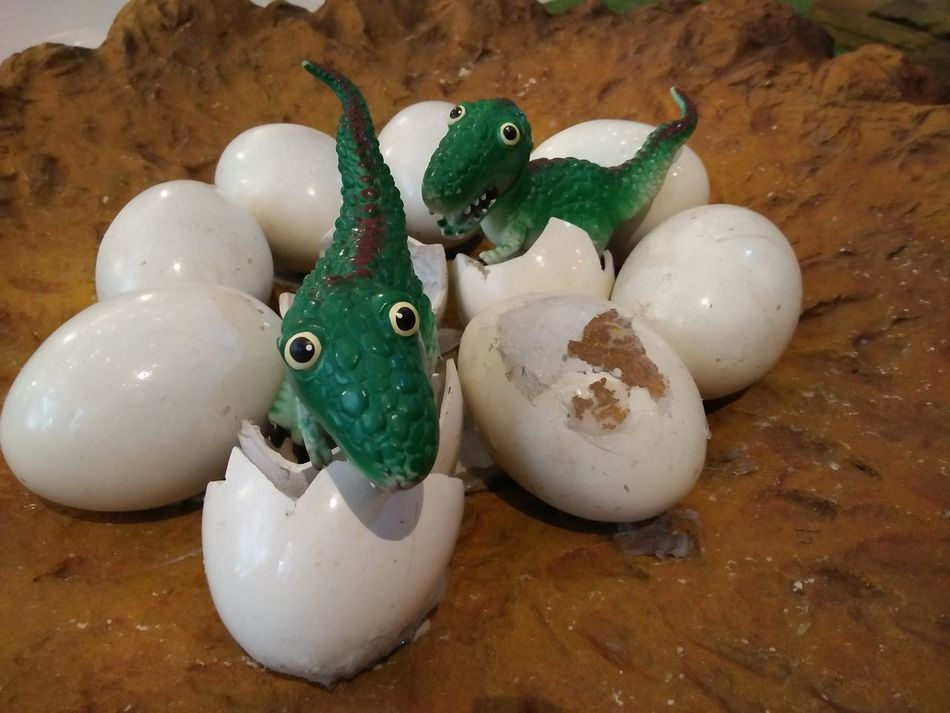 EyeEm Selects No People Indoors  Close-up Mammal Animal Representation Toy Toy Photography Dinosaur Dinosaurus Model Eggs Dinosaur Eggs Dinosaur Model
