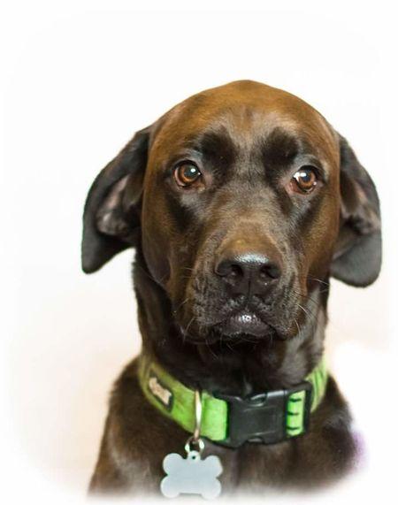is this My best side Dog Pet Portrait Animal Photography Animal Head  No People Retriever Studio Shot Sitting