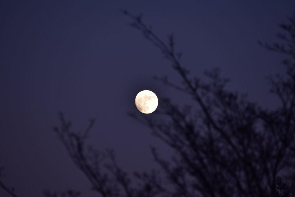 Moonlight Moon Moon Shots Moon Light Moon_collection Moonlight Photography Moonlightscape Tree And Sky Tree And Moon Moon Behind A Tree Moon At Dawn Moon At Dusk Moon At Night Full Moon Fullmoon Full Moon Light Full Moon Behind Tree Full Moon Rising Full Moon Through Winter Trees